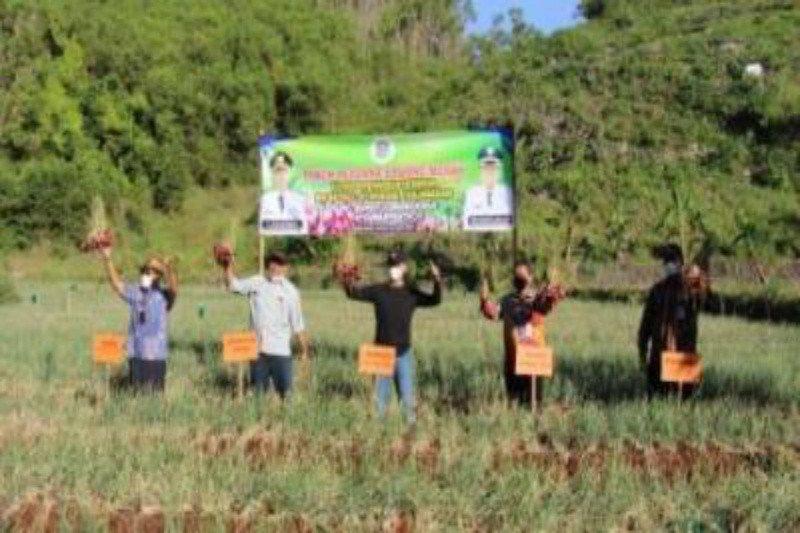 Gunung Kidul dukung petani pesisir tanam bawang merah