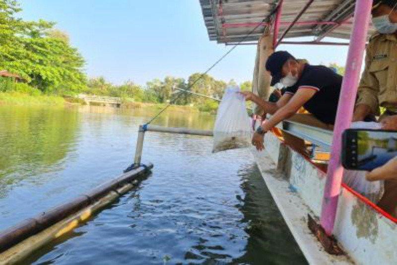 """Pemkab Gunung Kidul mengintensifkan """"restocking"""" ikan di perairan umum"""