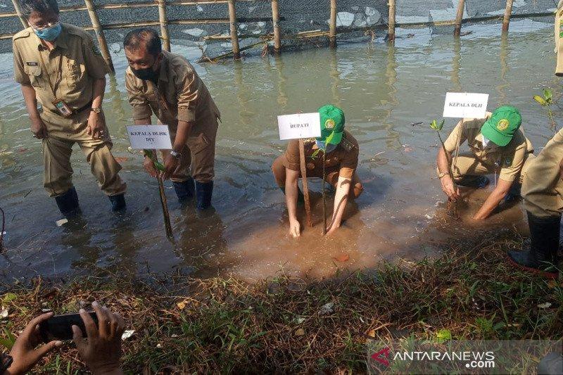 Pemkab Bantul tanam seribu bibit mangrove sambut Hari Keanekaragaman Hayati