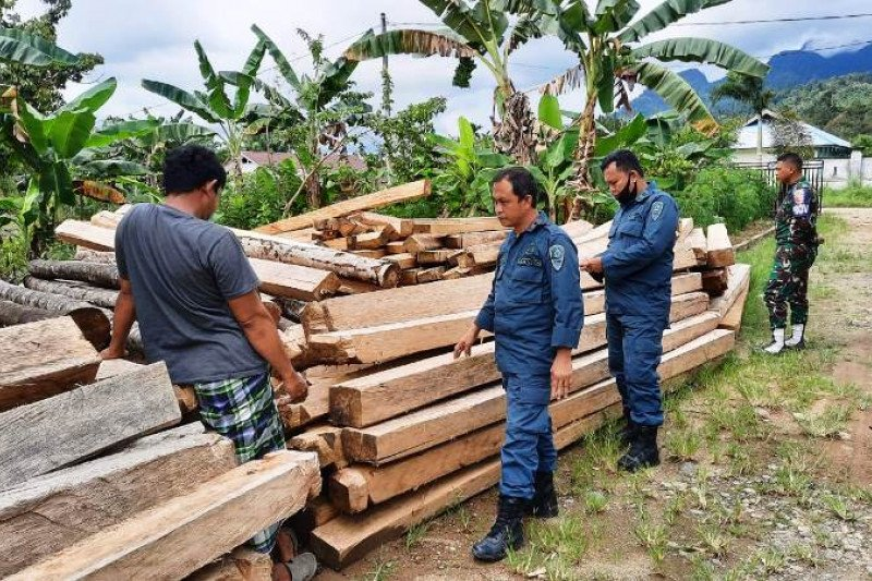 Gakkum KLHK sita 65 batang kayu hasil pembalakan liar di Mamuju