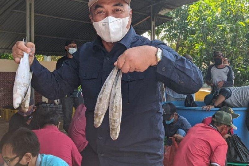 KKP bagikan paket ikan segar 2,5 ton di Karawang Jabar