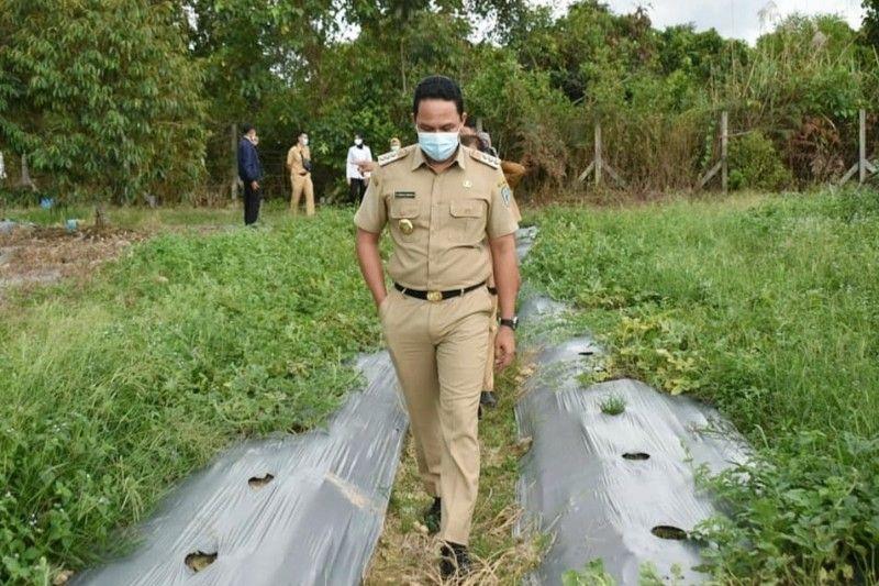 Kebun percontohan Balai Benih Pertanian potensial dijadikan agrowisata