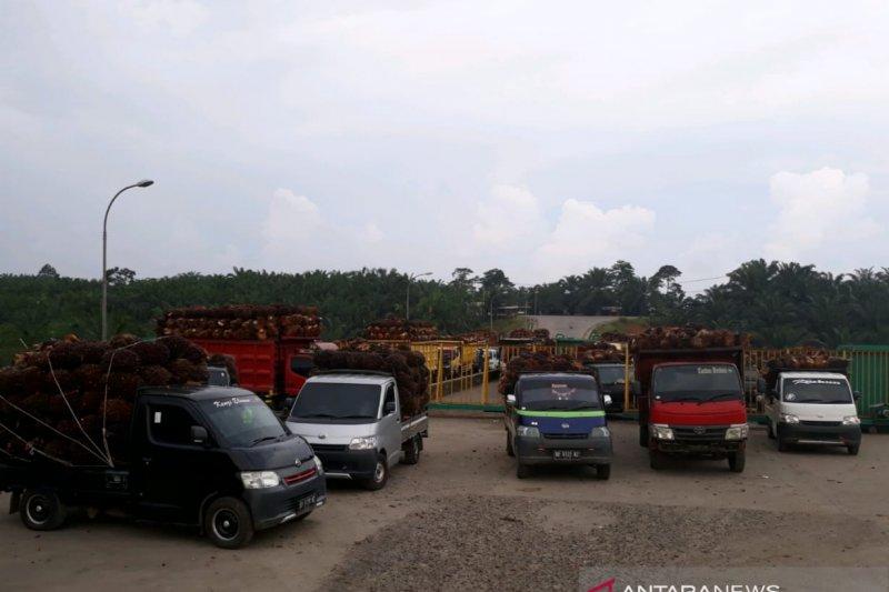 Pabrik tolak TBS sawit petani Mukomuko karena kelebihan pasokan