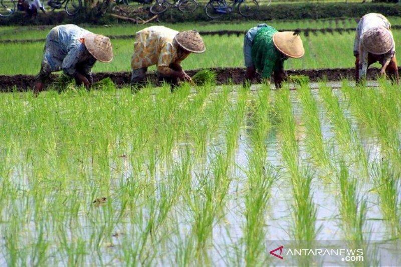 Dinas Pertanian OKU Timur salurkan bantuan bibit padi dan cabai
