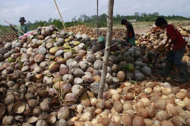 Sumsel andalkan ekspor komoditas buah kelapa