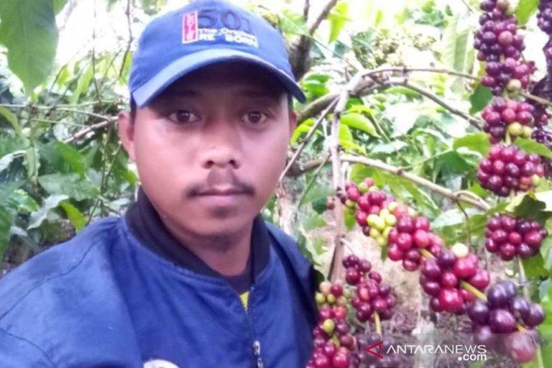 Petani diminta petik buah kopi berwarna merah