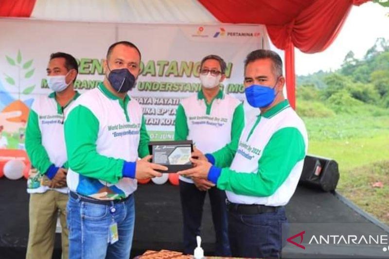 Pertamina EP Lestarikan Pohon Endemik