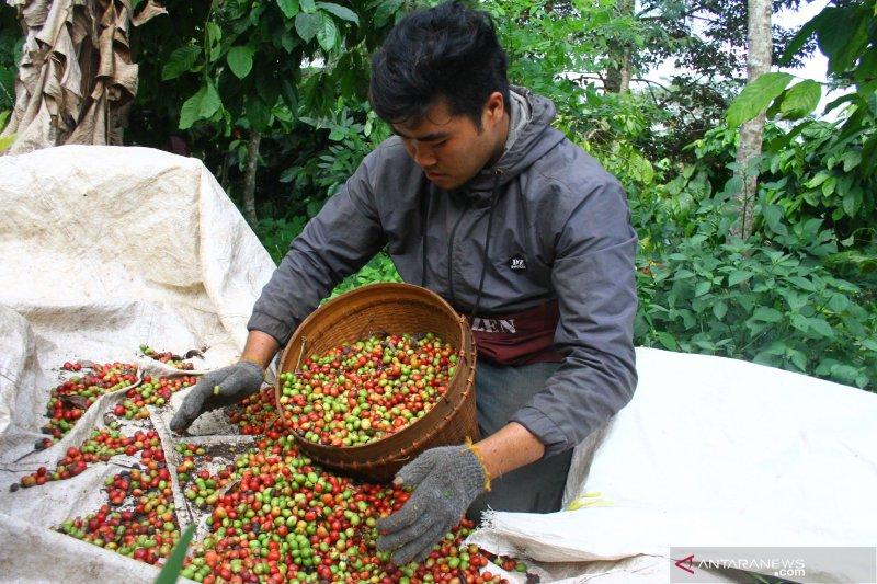 Petani kopi dan cokelat dilatih strategi  pemasaran produk