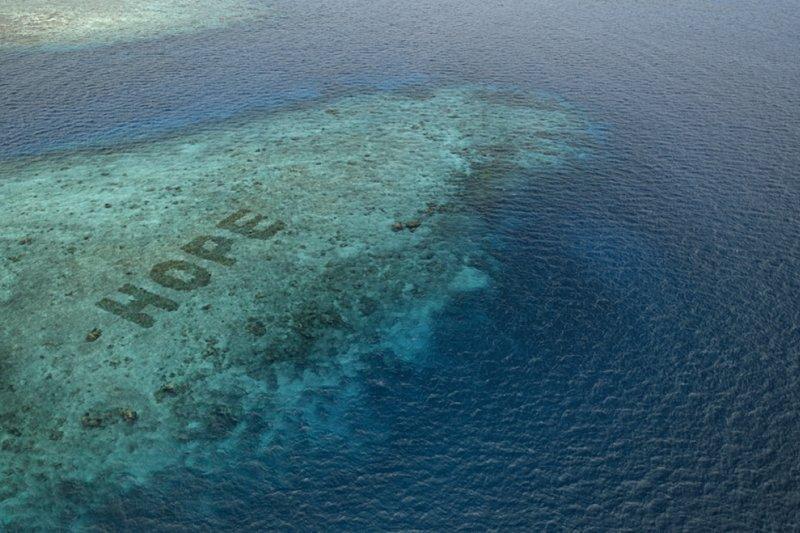 Hope Reef ikutkan masyarakat restorasi terumbu karang via film