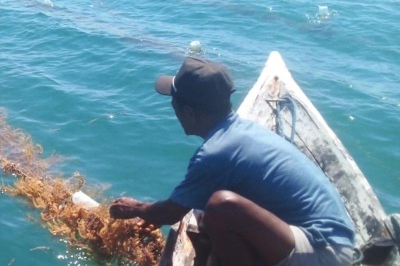 DKP identifikasi 74 penerima bantuan bibit rumput laut di Flores