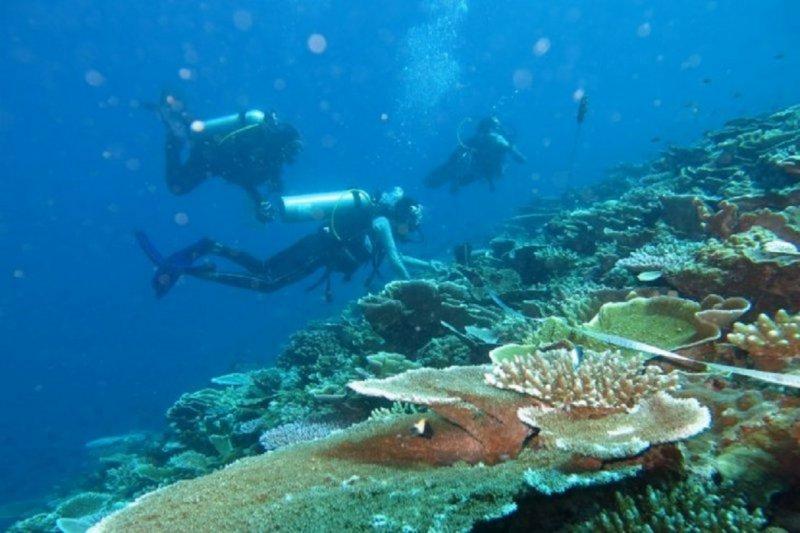 kementerian KKP kaji dampak badai Seroja terhadap terumbu karang di TNP Laut Sawu