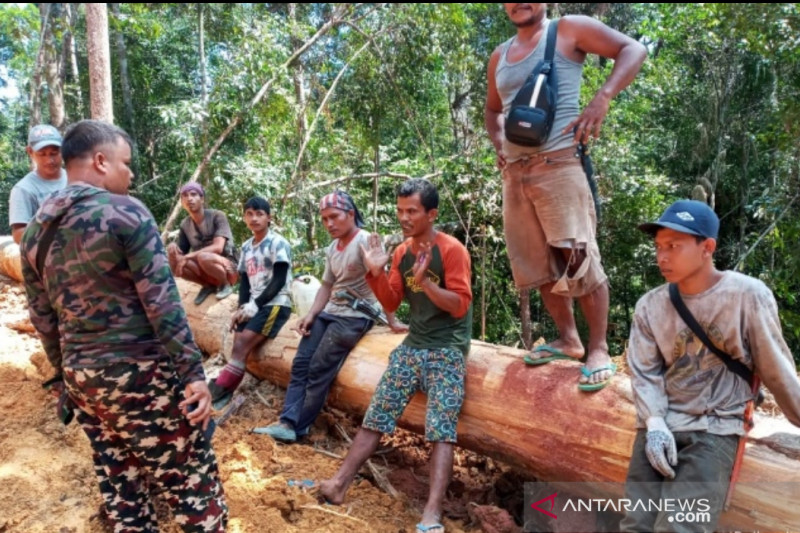 KLHK bersama TNI hentikan penebangan ilegal di SM Rimbang Baling, dua orang ditahan