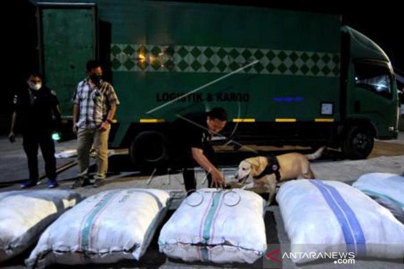 Penggagalan Pengiriman Paket Ganja Dari Medan Ke Bali
