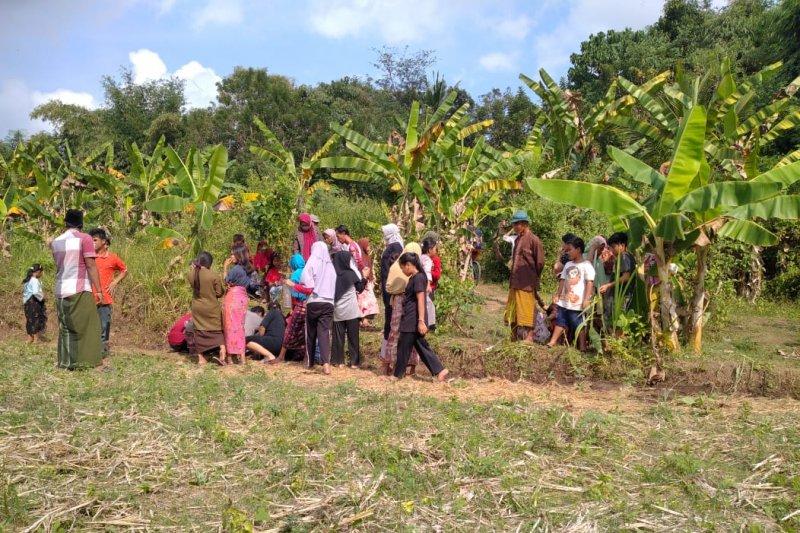 Heboh, tiba-tiba muncul sumber air di tengah sawah di Lombok Tengah