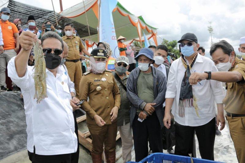 Lampung didorong kembangkan tambak udang modern
