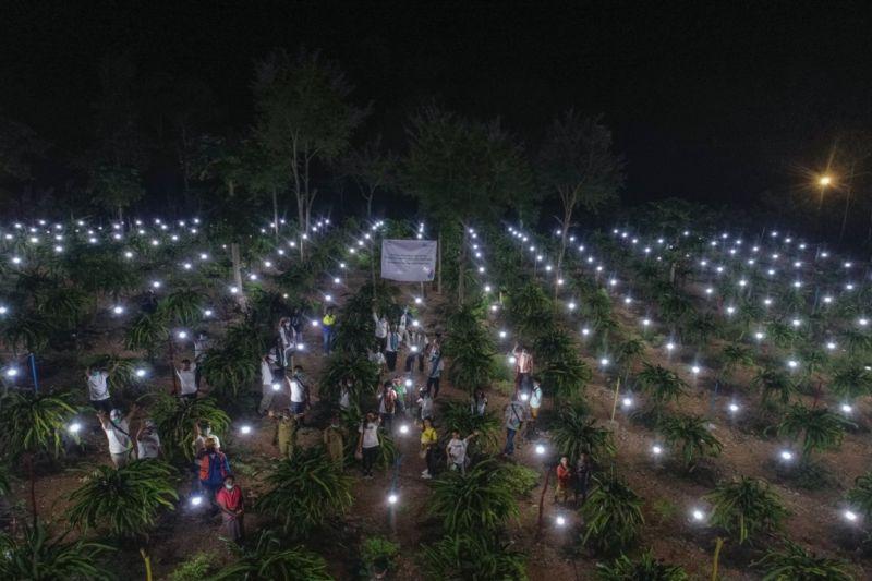 PLN pasok listrik dukung produktivitas petani buah naga