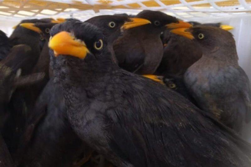 Karantina Pertanian Lampung gagalkan penyelundupan ribuan ekor burung