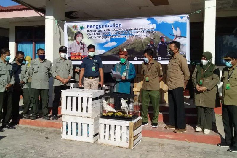 NTT returns rare birds to Maluku for release to their habitat