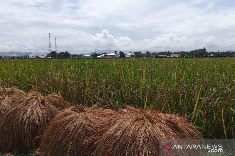 Sektor pertanian jadi penyumbang terbesar pertumbuhan ekonomi Sulawesi Selatan