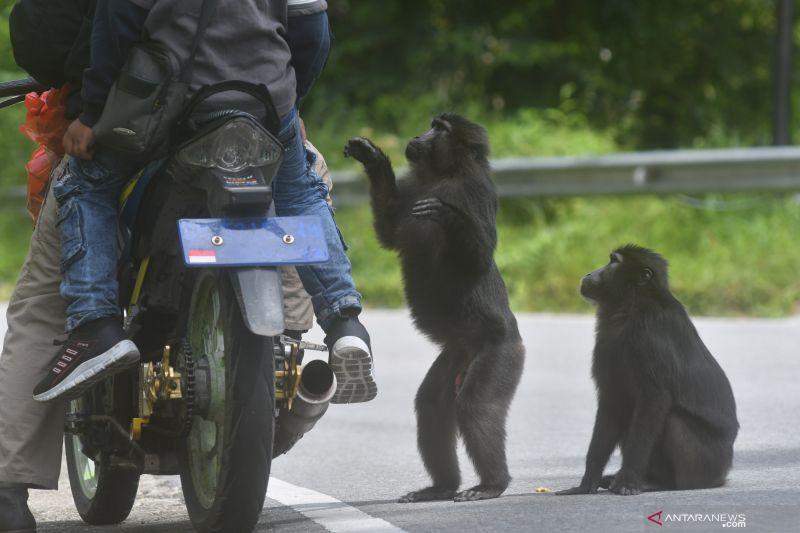 Dokter hewan pengidap pertama virus monyet di China meninggal dunia