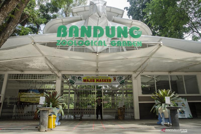 Kebun Binatang Bandung galang sumbangan untuk pakan satwa