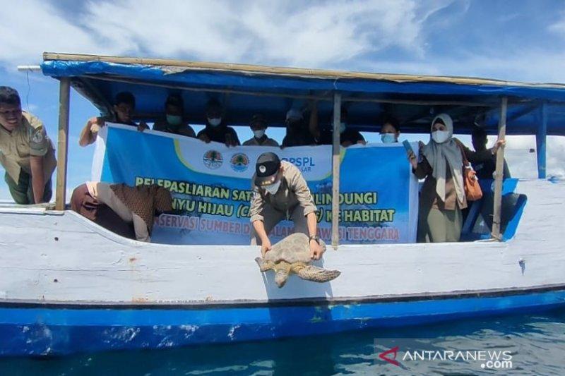 BKSDA Sultra-BPSPL Makassar melepasliarkan dua penyu hijau