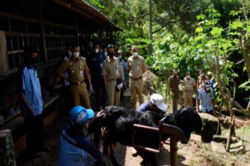 Pemkab Gunung Kidul mendukung pengembangan agro wisata kabing etawa