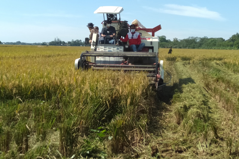 DPRD Jabar desak Bulog percepat penyerapan gabah petani Karawang