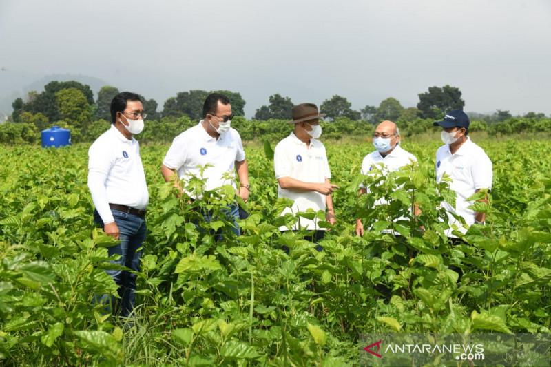 Petani binaan IPB sudah mampu ekspor tanaman hias