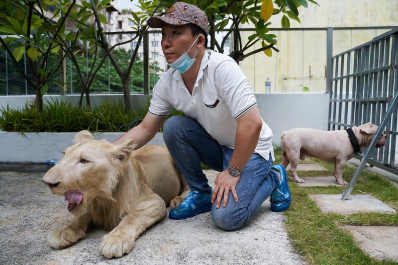 Singa TikTok di Kamboja dikembalikan ke pemiliknya, ini alasannya