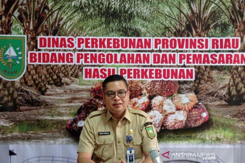 Harga sawit di Riau naik Rp182,96/kg