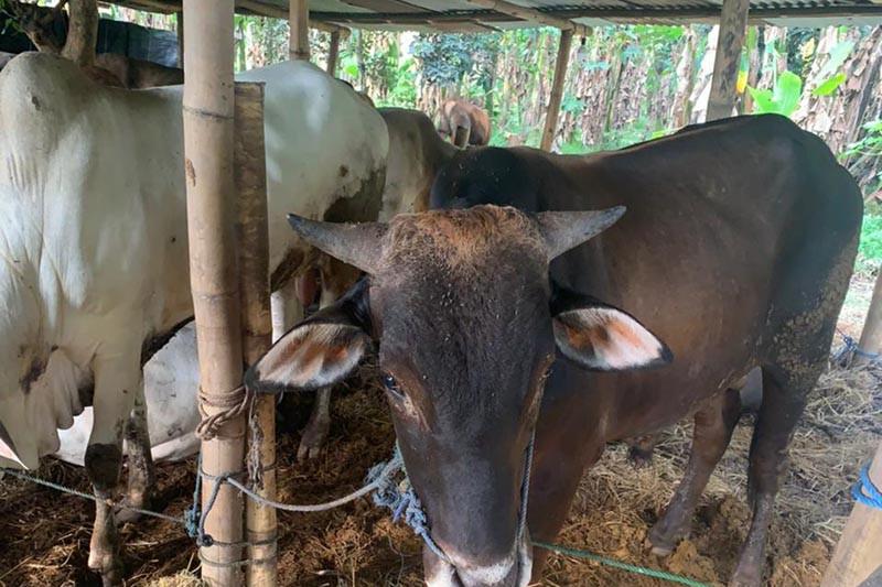 Kemenang Kota Magelang: Penyembelihan hewan kurban diminta patuhi prokes
