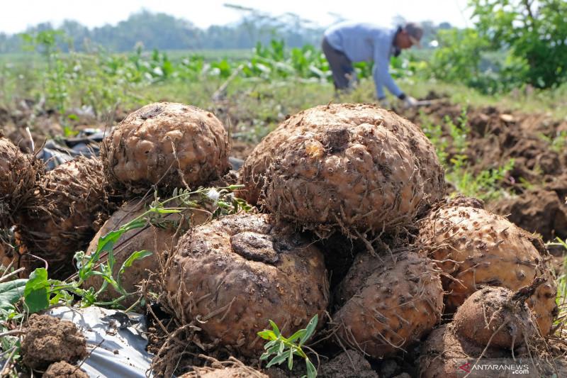 Indonesia fokus tingkatkan ekspor porang dan sarang burung walet