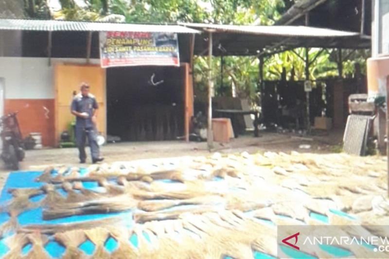 Usaha lidi kelapa sawit didukung kebun sawit luas di Pasaman Barat
