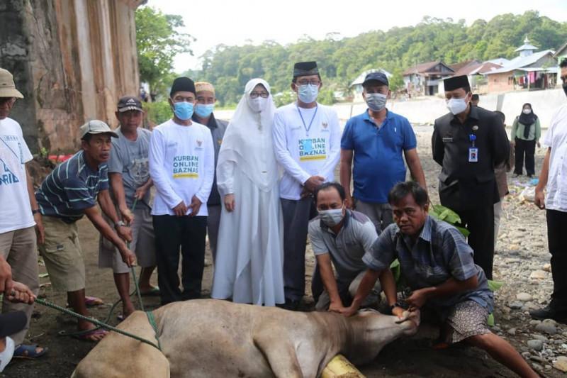 Bupati Pesisir Barat hadiri pemotongan hewan kurban
