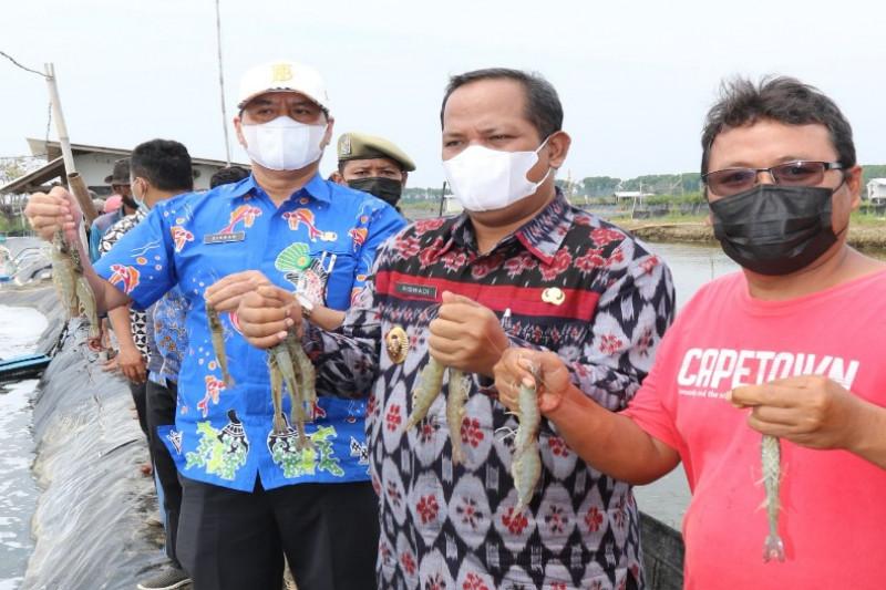 Panen raya udang vaname di Kabupaten Pekalongan