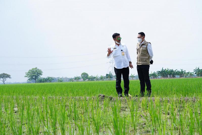 Mentan cek persawahan di Bekasi sambil pastikan stok beras aman