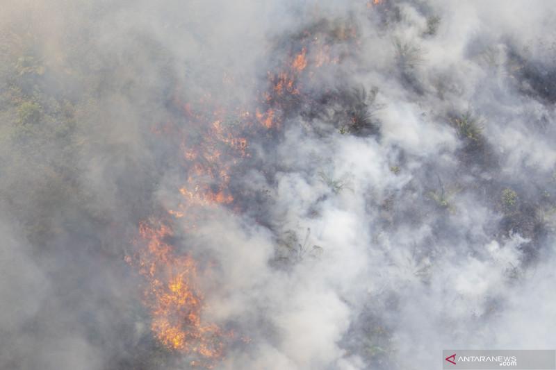 Kebakaran Lahan Perkebunan Kelapa Sawit di OKI