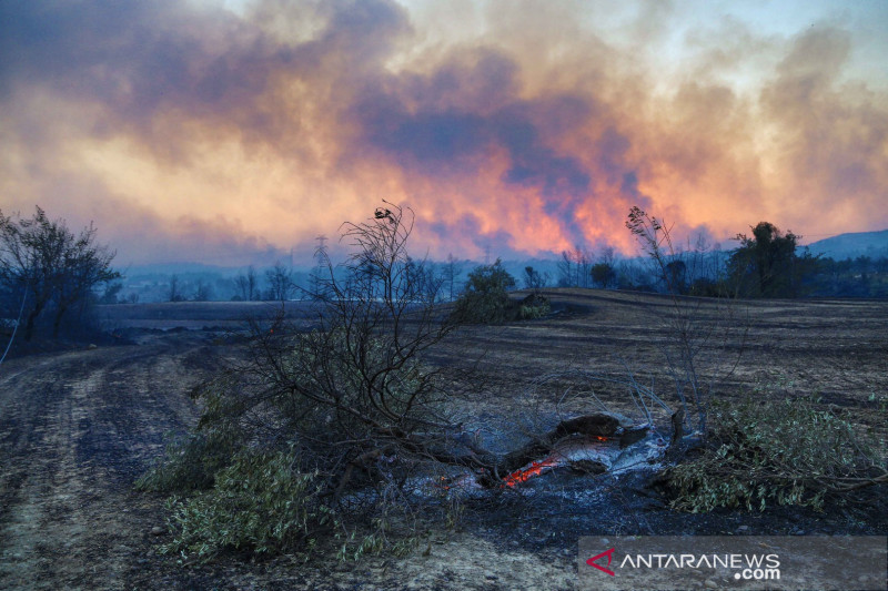 KBRI Ankara: Tak ada WNI jadi korban kebakaran hutan di Turki