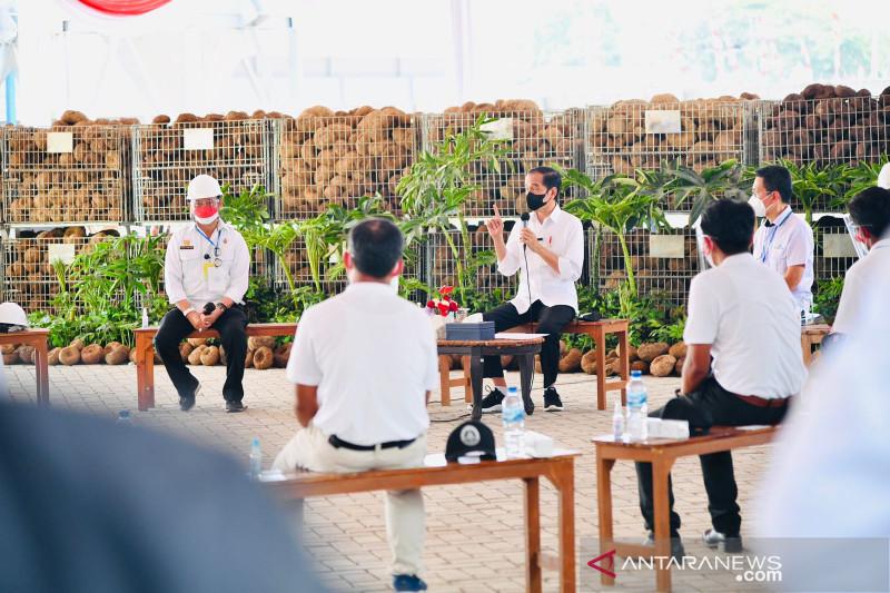 Presiden Jokowi dengarkan cerita petani milenial soal prospek cerah porang
