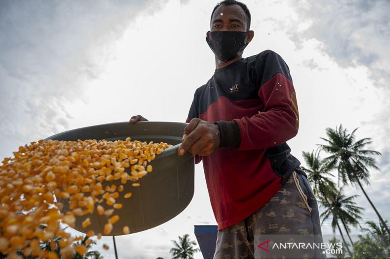 Realisasi KUR Sektor Pertanian Jagung