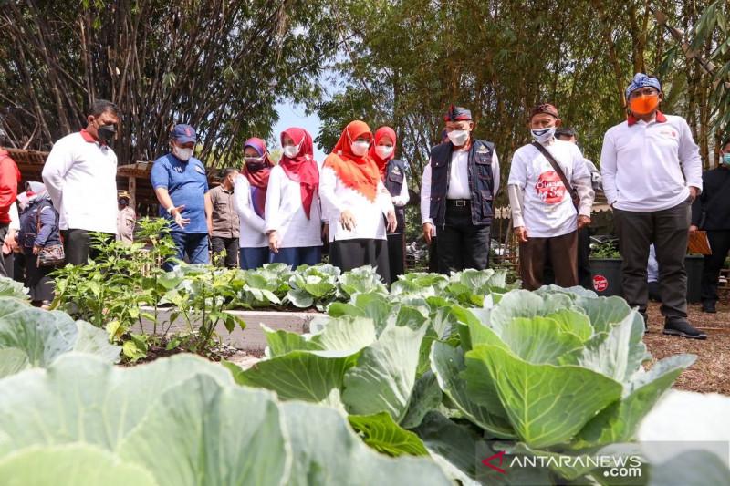 Pemkot Bandung terus perluas lahan untuk ketahanan pangan