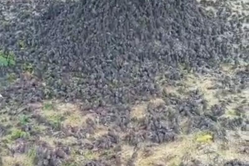 Artikel - Kematian burung pipit dan bioindikator kualitas lingkungan