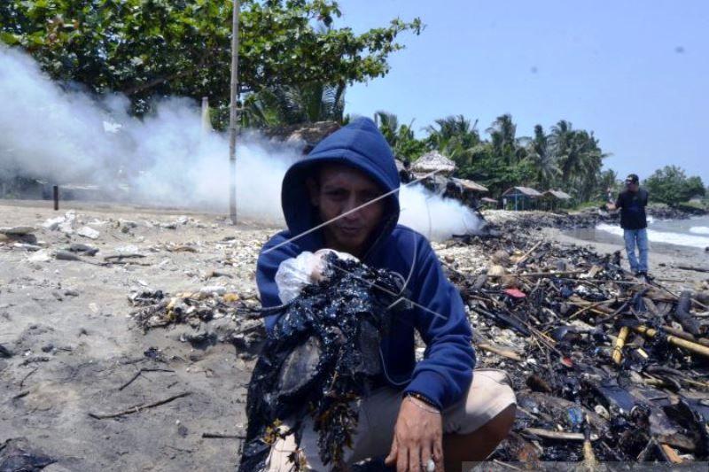 Limbah Minyak Cemari Laut Lampung