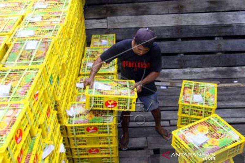 Ekspor Manggis Meningkat Lewat Pelabuhan Dumai