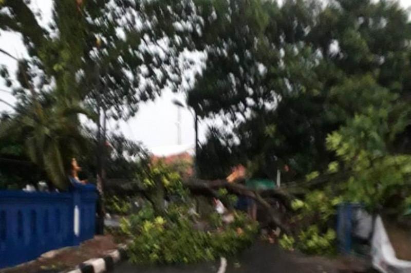Damkar Depok kerahkan tujuh tim tangani pohon tumbang akibat hujan lebat