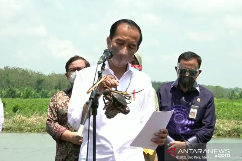 Presiden targetkan rehabilitasi 34 ribu hektare lahan mangrove