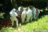 Pasien COVID-19 meninggal di Sulawesi Tenggara bertambah lima jadi 102 orang